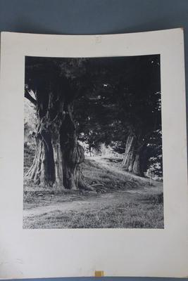Photograph of Memorial Park Trees