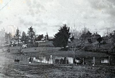 Kihikihi Lake