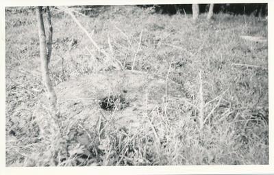 Oparau Mill Site