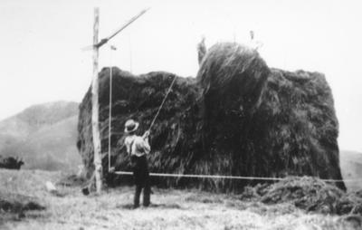 Stacking hay