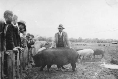 Pig Sales
