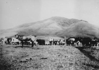West's Farm