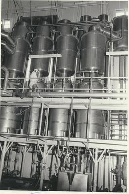 Lotus Dairy Factory