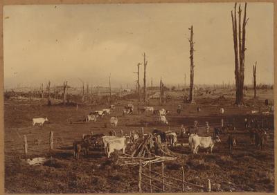 Pirongia Farm