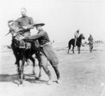 Boer War Pony