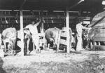 Milking Farm
